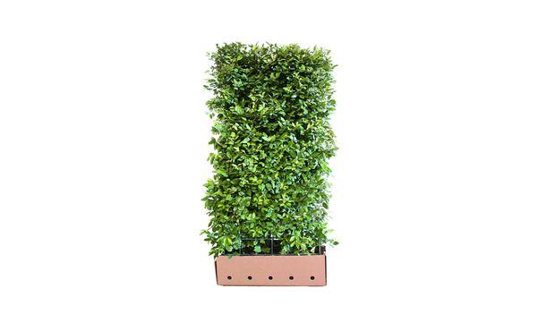 Sempergreen Biodiversiteitspakket • Gras en Groen Winkel