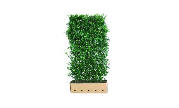 Quickhedge Hulst 'Heckenpracht' - 200 cm • Gras en Groen Winkel