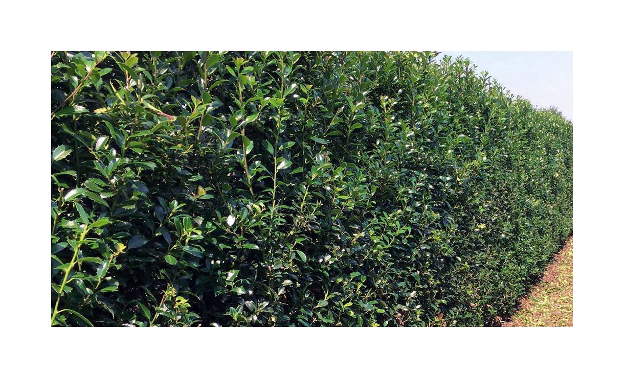 2 • Gras en Groen Winkel