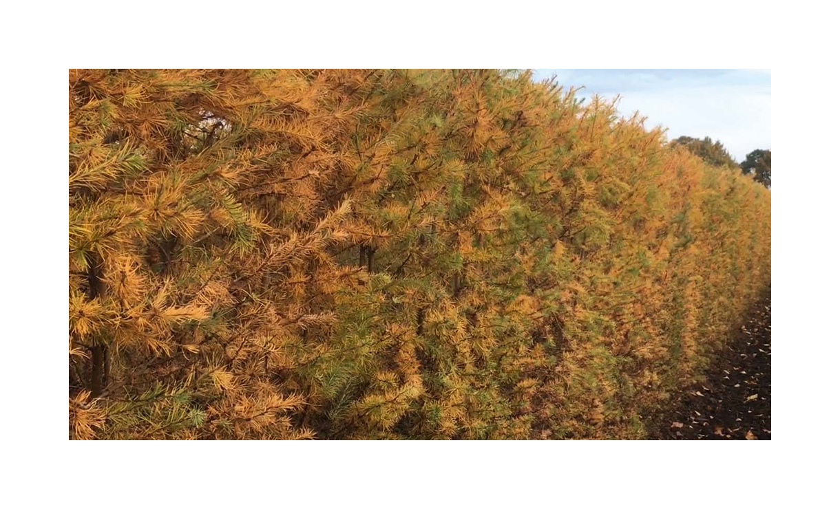 3 • Gras en Groen Winkel
