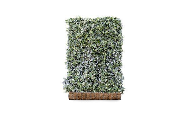 Kant-en-klaar Hedera 'Glacier' - 180 cm • Gras en Groen Winkel