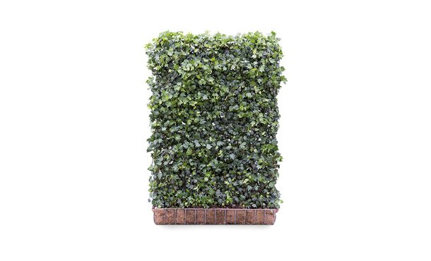 Kant-en-klaar Hedera Green Ripple - 180 cm • Gras en Groen Winkel