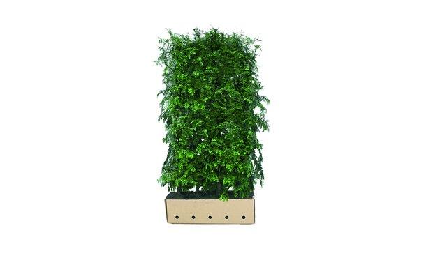 Quickhedge Watercipres - 200 cm • Gras en Groen Winkel