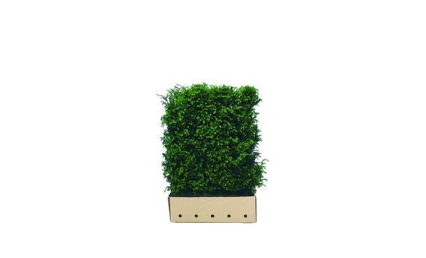Quickhedge Taxushaag - 120 cm • Gras en Groen Winkel
